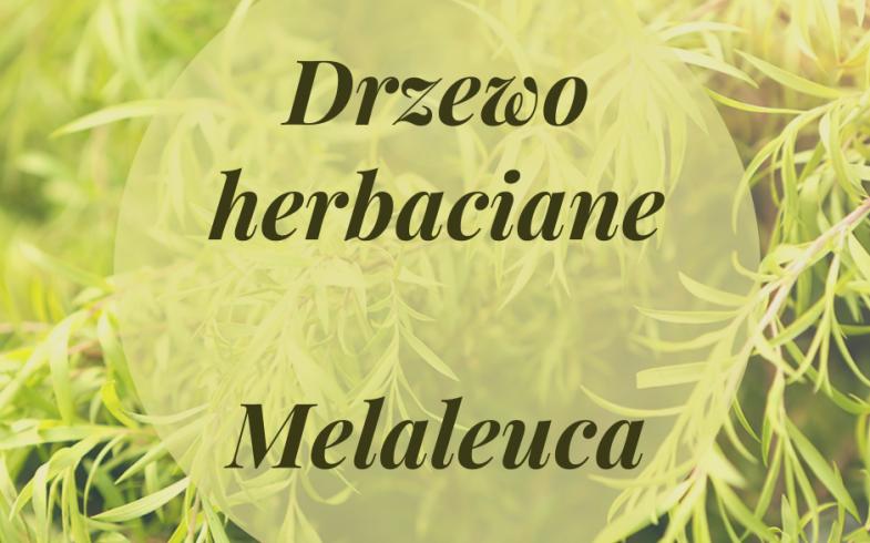 Olejek z drzewa herbacianego  Melaleuca
